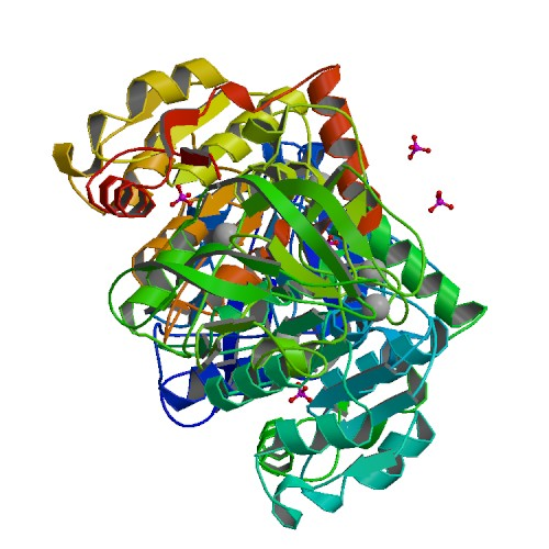 pbb_protein_adh5_image1